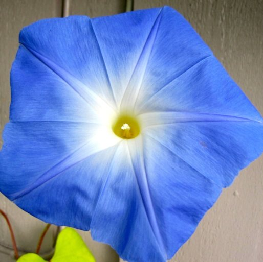 ASTROLOGENKRI FOTO
