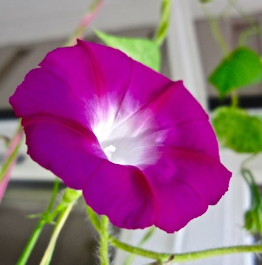 ASTROLOG KARI FOTO